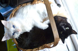Shadow and Jett in basket